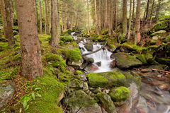 Strom im Wald stockfoto