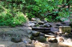 Strom im Wald Stockbild