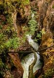 Strom im Wald. Gefallene Bäume. Herbst. Slowenien Stockfotos