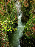 Strom im Wald. Herbst. Slowenien lizenzfreie stockfotografie