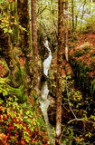 Strom im Wald. Herbst. Slowenien. Stockfotos