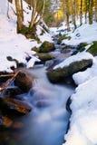 Strom im wood3 Lizenzfreie Stockfotografie