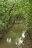 Strom mit lehnendem Baum Stockfoto