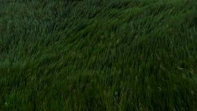 Strom moln över grässlätten, Okavango, sydliga Afrika arkivfoton
