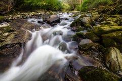 Strom in Tollymore Forest Park lizenzfreie stockbilder