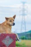 Strom und Hund Lizenzfreie Stockbilder