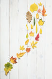 Strom von bunten Herbstblättern stockfotografie