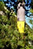 Strom-Warnsymbol auf einer Kiefer Stockfotografie