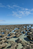 Stromalotites världsarv Australien Fotografering för Bildbyråer