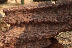 Stromatolite石背景纹理 免版税图库摄影