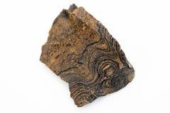 Stromatolite矿物被隔绝在白色 免版税库存照片