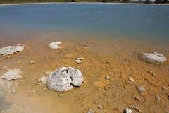 Stromatolite Royaltyfri Fotografi