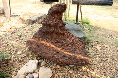 Stromatolite kamie? na zmielonym wizerunku tle zdjęcie royalty free