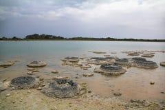 Stromatolite no lago Thetis, Austrália Ocidental Fotos de Stock