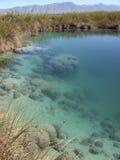 Stromatolite Riff Cuatro Cienegas Mexiko stockfotos