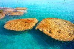 Stromatolites在墨西哥的Bacalar盐水湖 图库摄影
