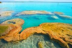 Stromatolites在墨西哥的Bacalar盐水湖 库存图片