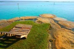 Stromatolites在墨西哥的Bacalar盐水湖 免版税库存图片