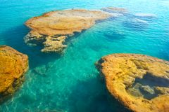 Stromatolites在墨西哥的Bacalar盐水湖 免版税库存照片