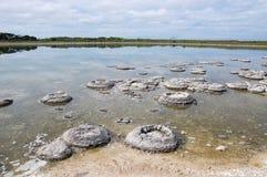 Stromatolites在湖Thetis 免版税库存图片