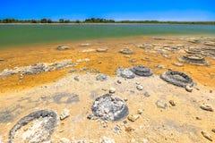 Stromatolites湖忒提斯 库存照片