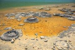 Stromatolites湖忒提斯 库存图片