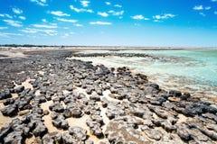 Stromatolites澳大利亚 免版税库存图片