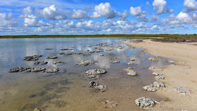 stromatolites的形成在湖Thetis 免版税库存图片