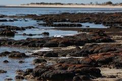 Stromatolites风景在哈默尔恩水池澳大利亚西部的 库存图片