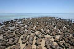 Stromatolites,澳大利亚西部 免版税库存图片