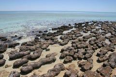 Stromatolites,西澳州 免版税库存图片