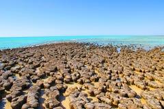 Stromatolites,鲨鱼湾,西澳州 库存图片