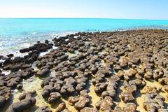Stromatolites,鲨鱼湾,西澳州 免版税库存图片