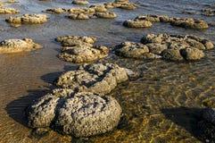 Stromatolites στη δυτική Αυστραλία Στοκ φωτογραφία με δικαίωμα ελεύθερης χρήσης