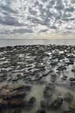 stromatolites 哈默尔恩水池海洋自然保护 Gascoyne地区 澳大利亚西部 免版税图库摄影