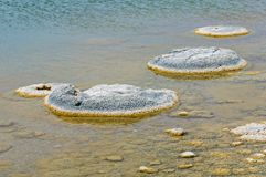 Stromatolites -湖忒提斯 库存照片