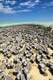 Stromatolites Royalty Free Stock Image