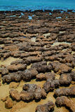 Stromatolites Stock Photo