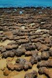 stromatolites 库存照片