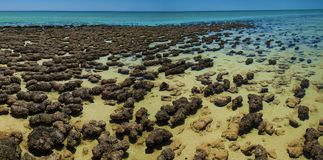 Stromatolites Royalty Free Stock Photography