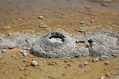 Stromatolites 免版税图库摄影