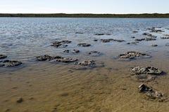 stromatolites Στοκ Φωτογραφίες