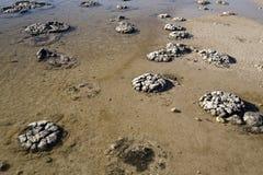 stromatolites 库存图片