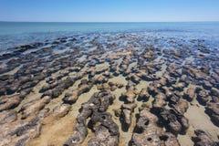 stromatolites Imágenes de archivo libres de regalías