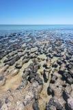 stromatolites Lizenzfreies Stockbild