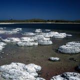stromatolites Fotos de archivo libres de regalías