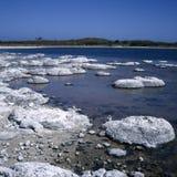 stromatolites Foto de archivo