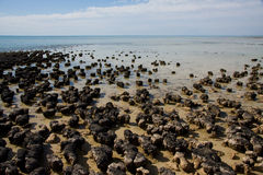 Stromatolites Royalty Free Stock Images