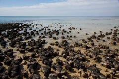 stromatolites royaltyfria bilder