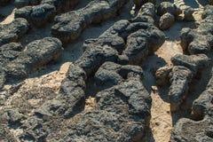 stromatolites Image libre de droits